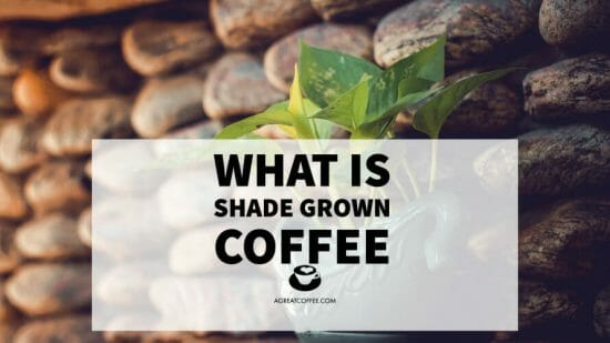 What Is Shade Grown Coffee